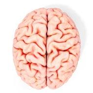cerebro sobre fondo blanco