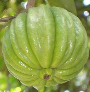 garcinia-cambogia-fruta