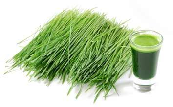 Cebada y Nutrientes