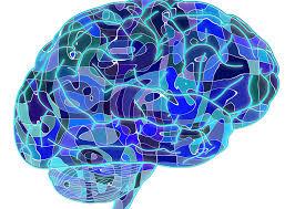modafinilo inteligencia