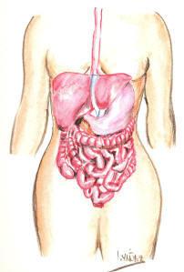 menta en el tracto digestivo